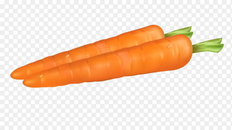Fresh two Carrots on transparent background PNG