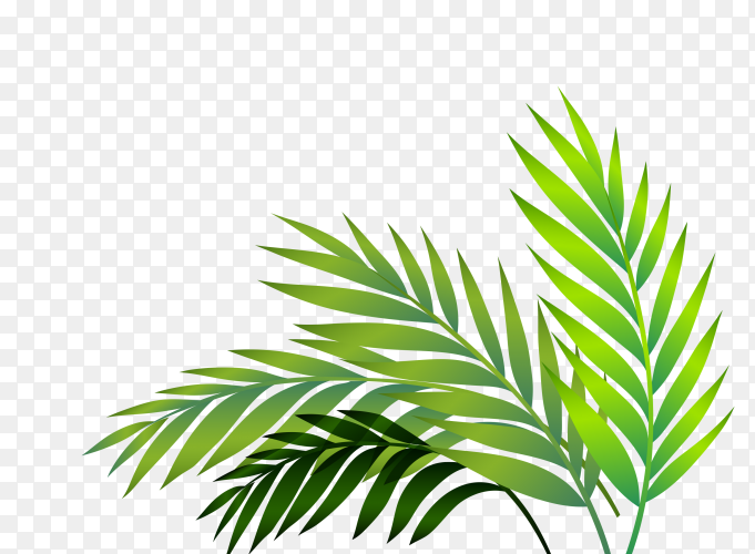 Long green leaves on transparent background PNG