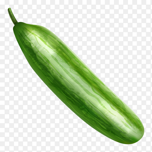 Green cucumber on transparent background PNG