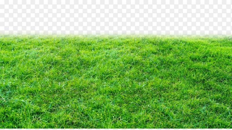 Green grass field on transparent background PNG
