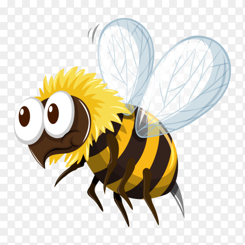 Bee isolated cartoon vector PNG
