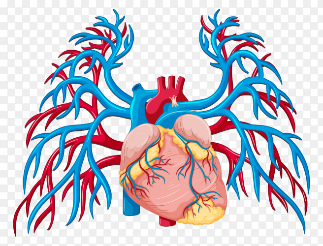 Human heart sclerosis vector PNG