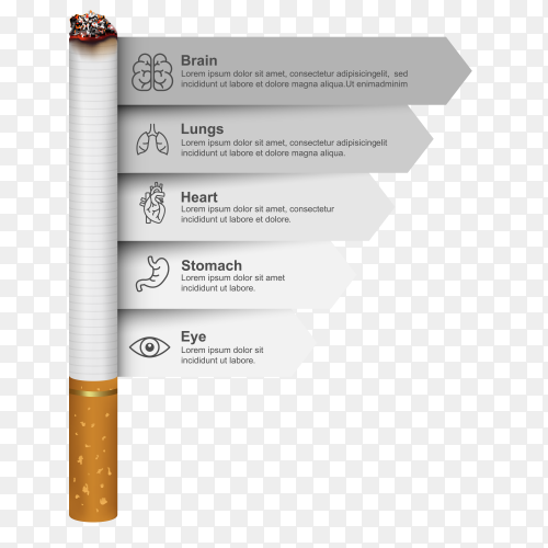 Illustration The harmful effects of smoking on the body vector PNG