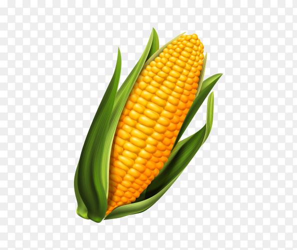 Illustration of Sweet corn on transparent background PNG