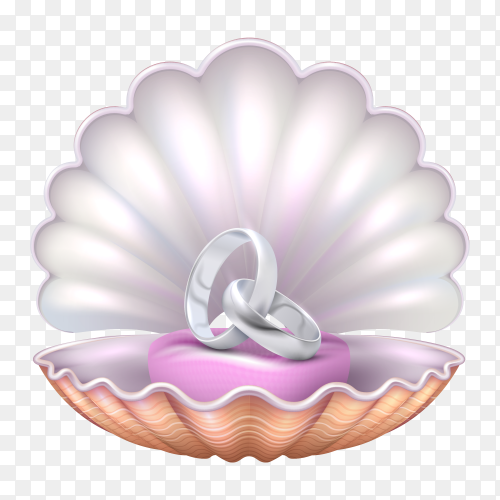 Marriage rings into seashell on transparent background PNG
