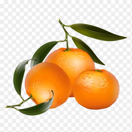 Orange fruit Clipart PNG