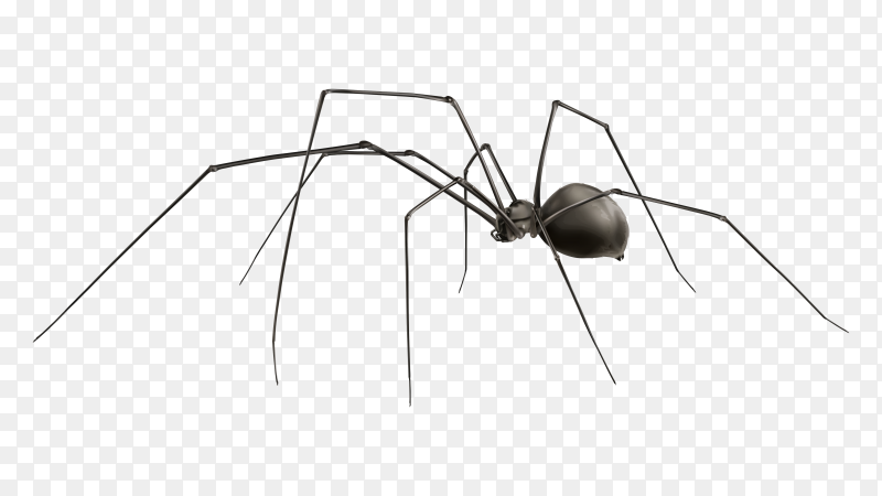 Realistic spider isolated Clipart PNG