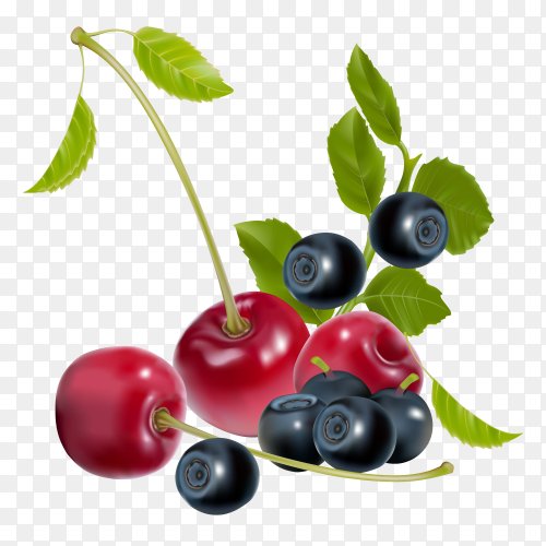 Red and black cherry fruit on transparent background PNG