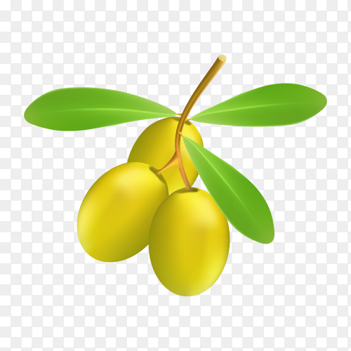 Ripe green olives with leaves Premium vector PNG