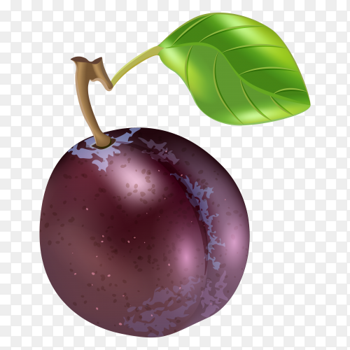 Ripe purple plum fruits with green leaves on transparent PNG