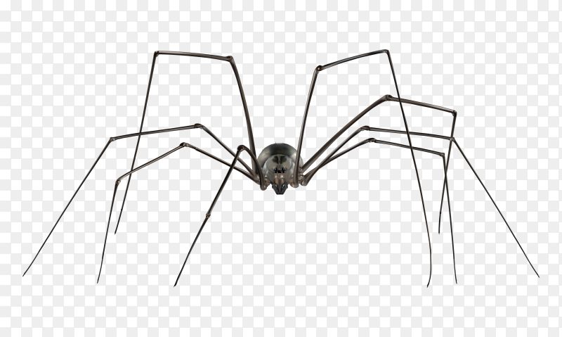 Spider Animal on transparent background PNG