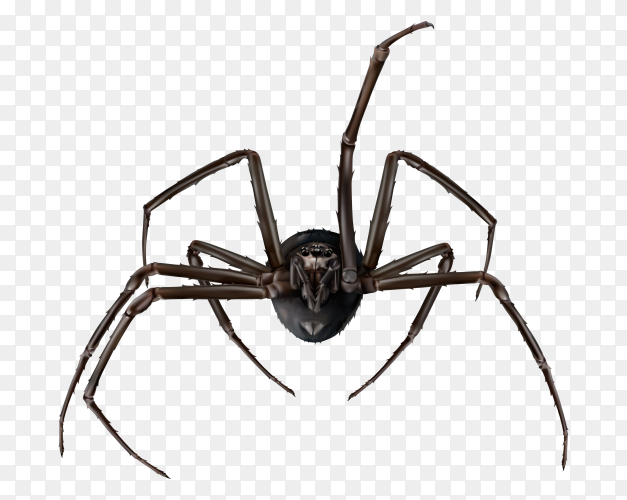 Spider isolated on transparent PNG