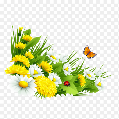 Spring Design with daisies and fresh green grass on transprent background PNG