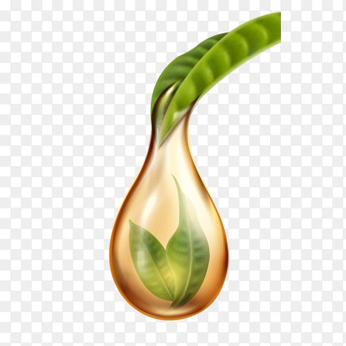 Tea dropping on transparent background PNG