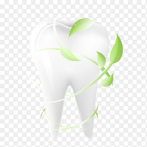 Tooth on transparent PNG