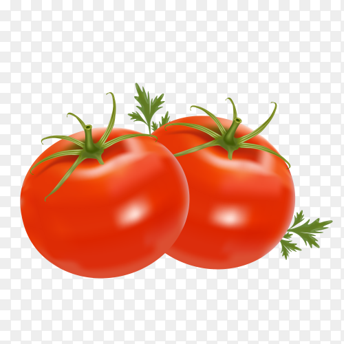 Two isolated tomatoes Premium on transparent PNG