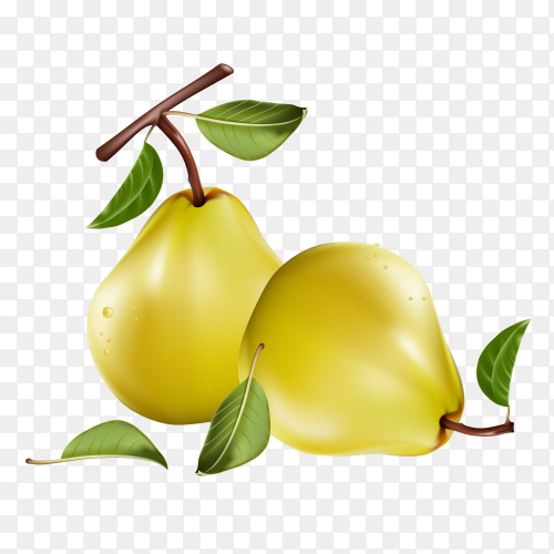 Two pears Premium vector PNG