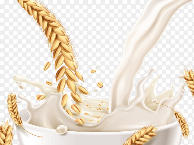 Wheat ears splashing milk realistic vector PNG