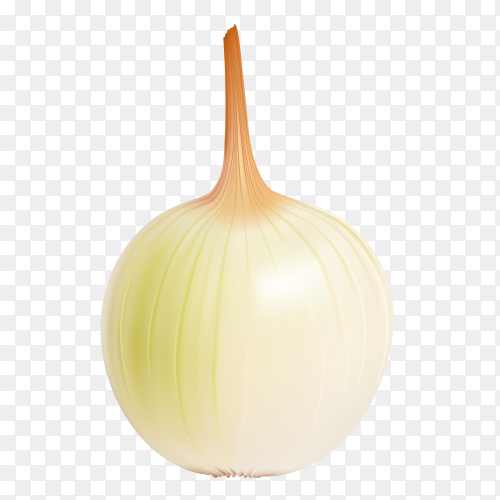 White Fresh onion vector PNG