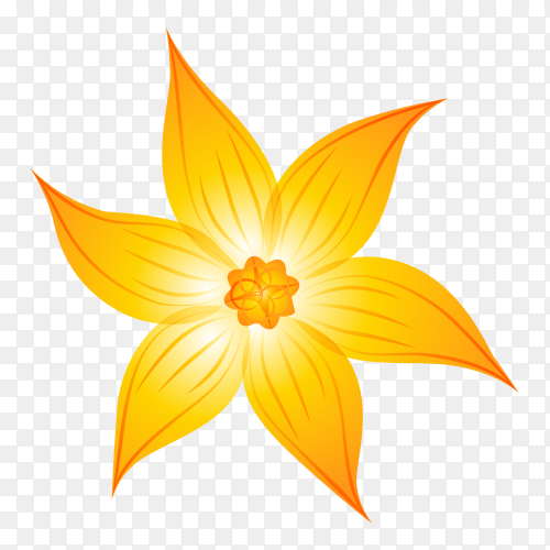 Yellow flower on transparent PNG