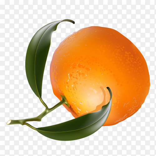 orange fruits with leaf on transparent background PNG