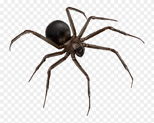 Black spider on transparent background PNG
