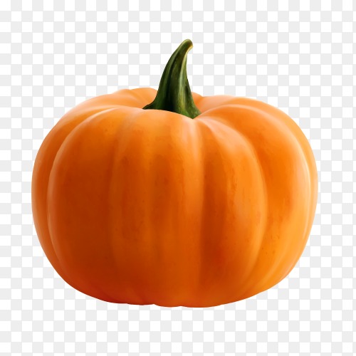 Fresh pumpkin on transparent background PNG