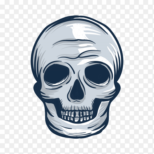 Human skull drawing on transparent background PNG
