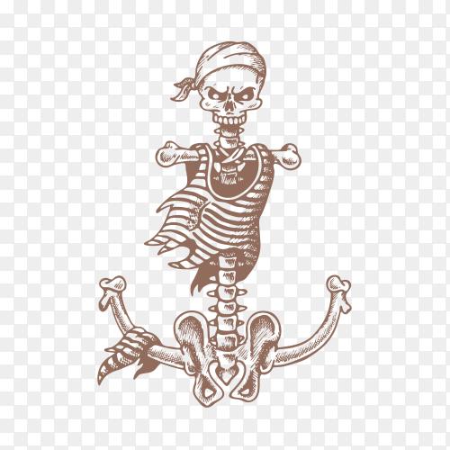 Realistic human skeleton on transparent background PNG