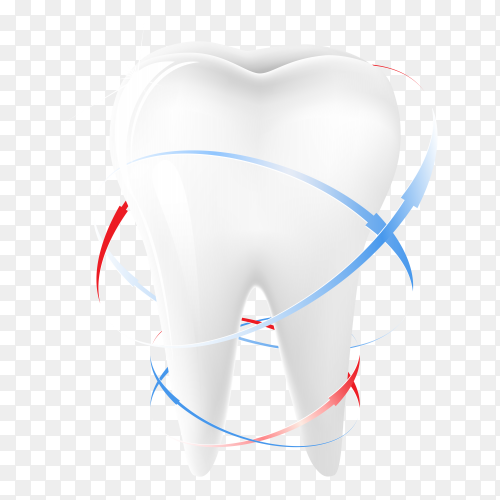 Tooth Premium vector PNG