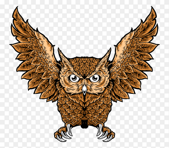 Cartoon owl illustration on transparent background PNG