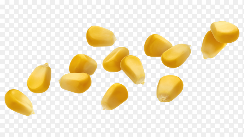 Falling corn seeds isolated on transparent background PNG