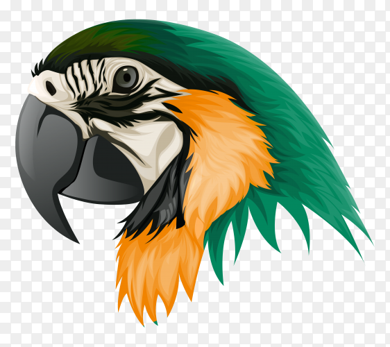 Feathered parrots are green yellow Illustration on transparent background PNG