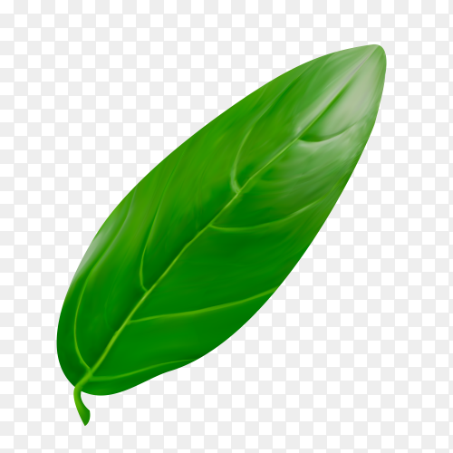 Green Leaf on transparent background PNG