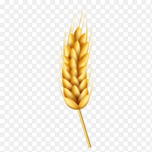 Realistic wheat composition on transparent background PNG