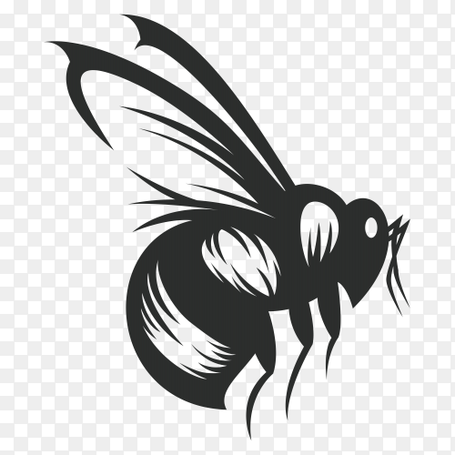 Bee drawing illustration isolated on transparent background PNG