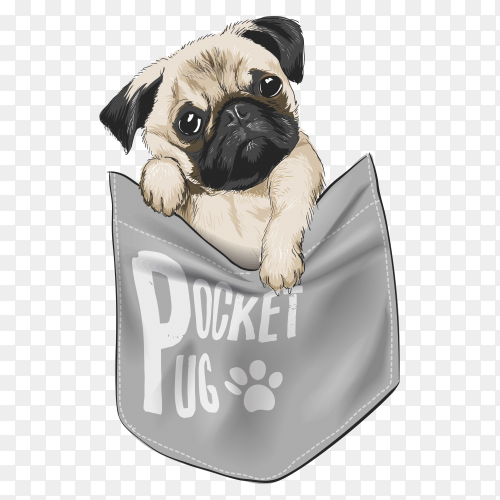 Cute dog in shirt pocket illustration on transparent background PNG