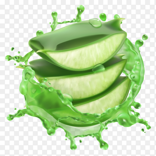 Green Aloe vera with water splashes on transparent background PNG