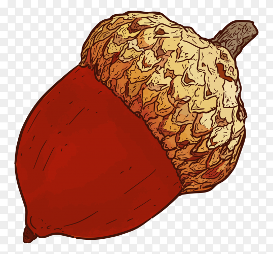 Hand drawn acorn illustration on transparent background PNG