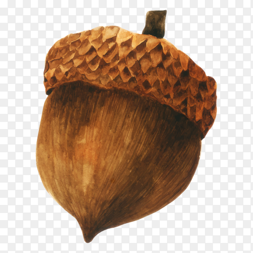 Hand drawn brown acorn isolated illustration on transparent PNG