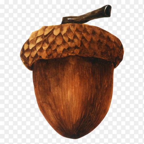 Hand drawn brown acorn template premium vector PNG