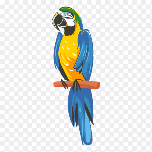 Hand drawn parrot with blue and yellow colors on transparent background PNG