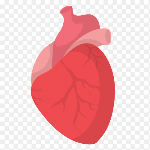 Human heart isolated on transparent background PNG