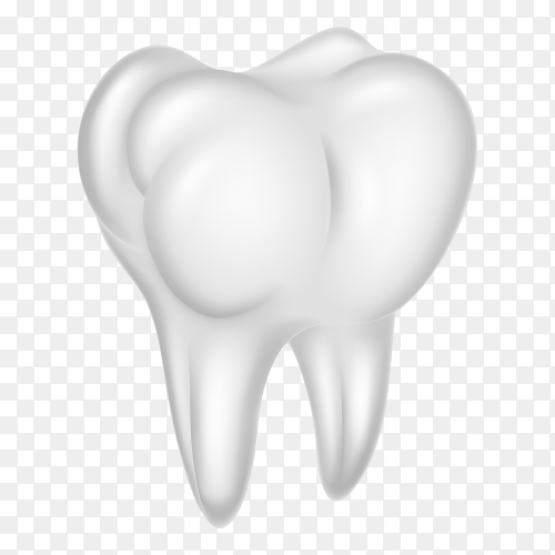 Human molar teeth realistic on transparent background PNG