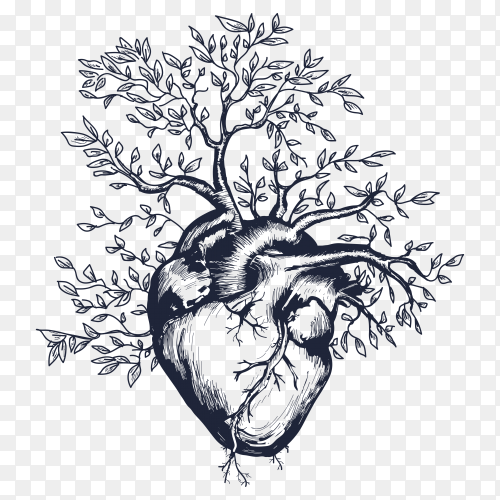Illustration of Anatomical human heart from which the tree grows heart premium vector PNG