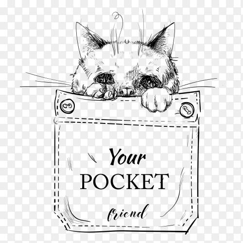 Little purebred cat in pocket on transparent background PNG