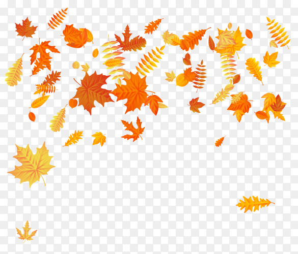 Autumn background with falling red and yellow leaves of oak on transparent background PNG