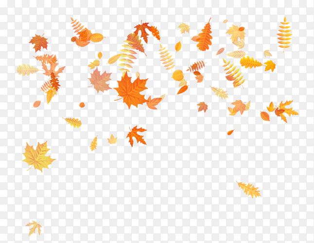 Autumn with golden maple, oak and others leaves on transparent background PNG