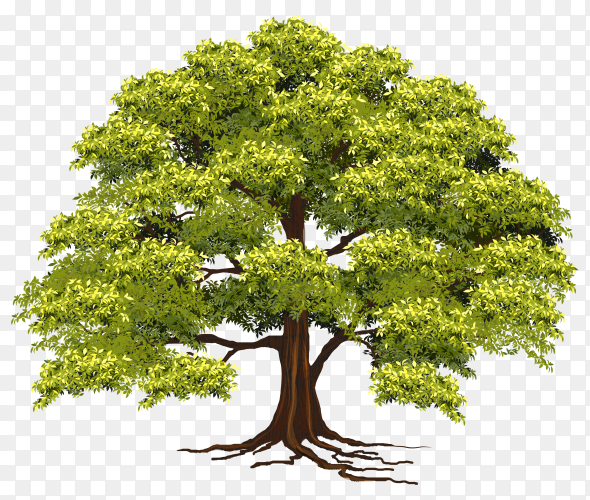 Beautiful tree realistic on transparent background PNG