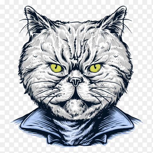 Cat wearing jacket rider on transparent background PNG